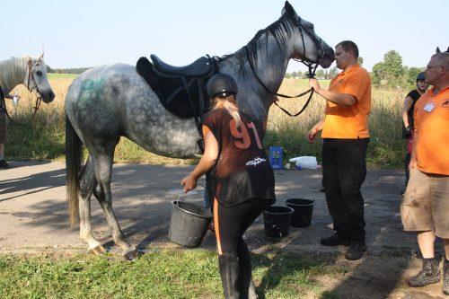 Wasser für die Distanzpferde