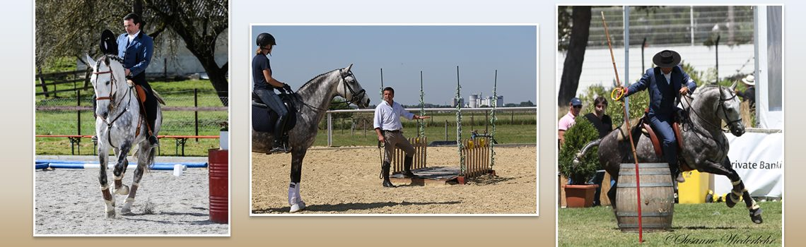 "Nuno Avelar: ""Working Equitation ist feine Kommunikation"""