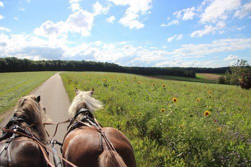 Kutschfahren in der Natur