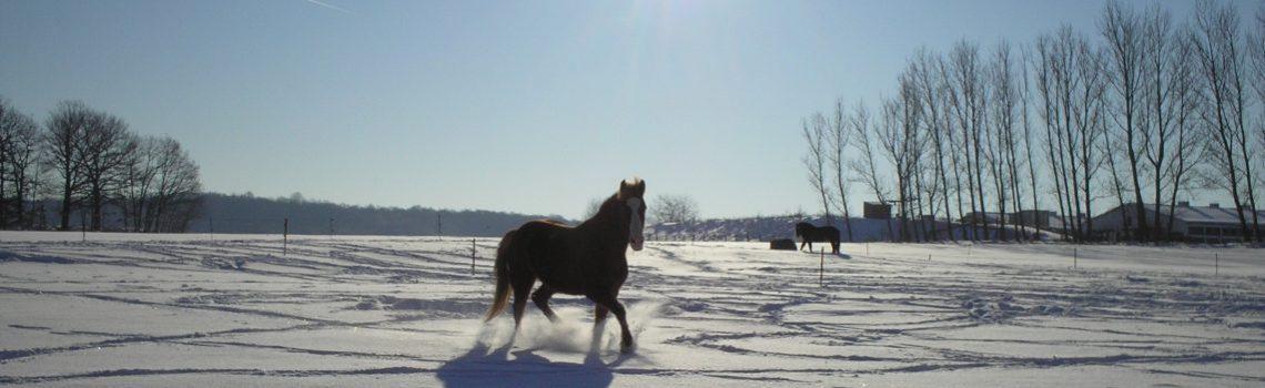 Pferde fit für den Winter machen