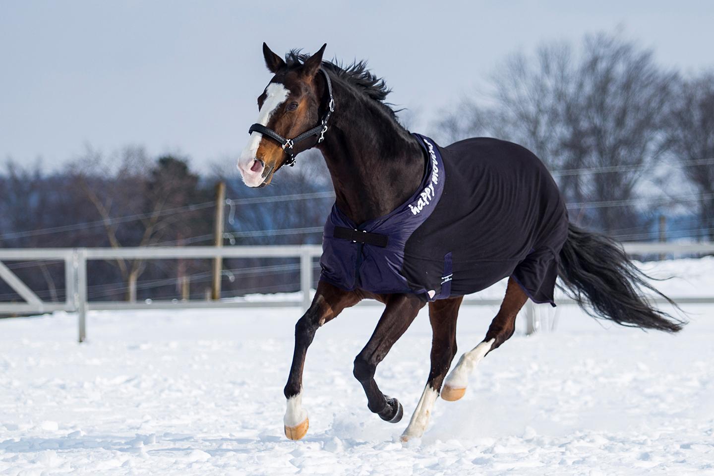 das hilft einem pferd gegen r ckenprobleme im winter der reitsport blog. Black Bedroom Furniture Sets. Home Design Ideas