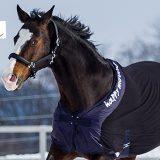 Das hilft einem Pferd gegen Rückenprobleme im Winter