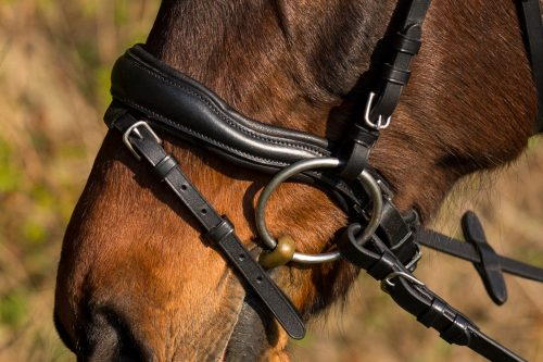 Nasenriemen mit Jochbeinausschnitt des Trensenzaum Estoril