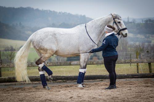 Pferd wird an Hinterhand touchiert.