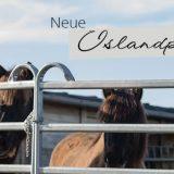 Neue Islandpferdetrensen bei Loesdau