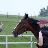 Pferde-Videos mit Sabine Ellinger und Fioneeeer