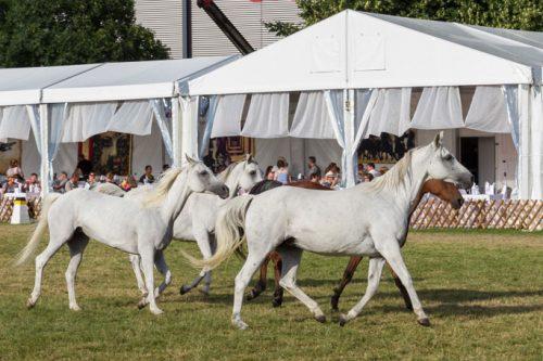 Pferde auf der eurocheval