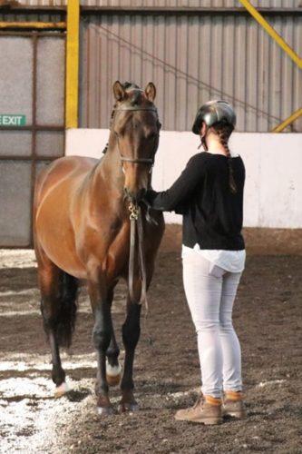 Frau mit Pferd an der Hand.