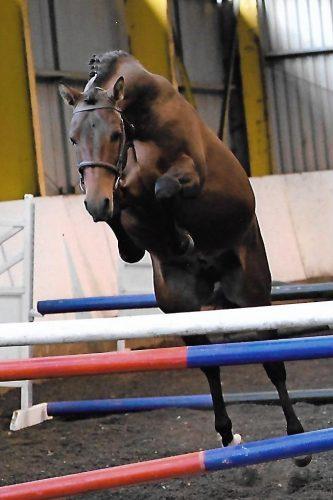 Pferd beim Freispringen.