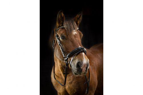 Trensenzaum Stella am Pferd