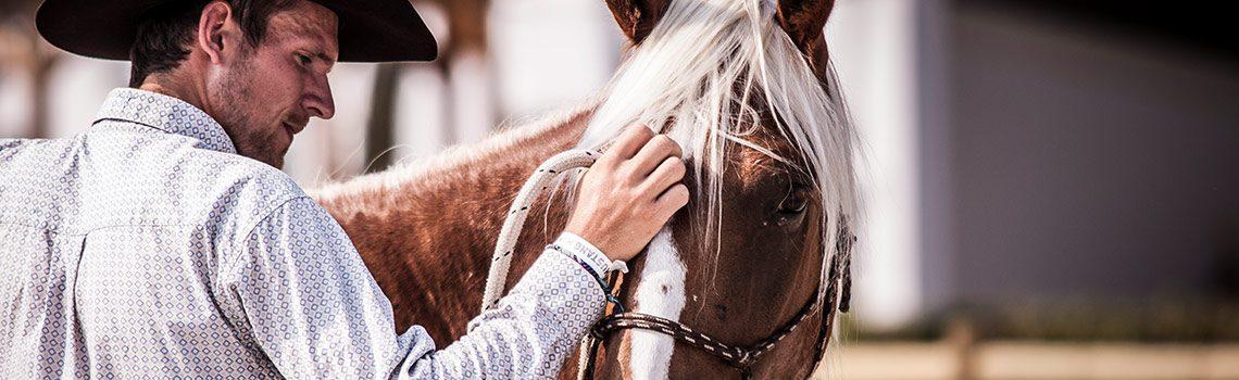 Zum Wohle der Mustangs: das Mustang Makeover