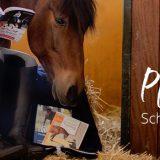 Pferde motivieren: Schluss mit dem Winterblues