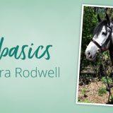 Pferdebasics mit Sandra Rodwell