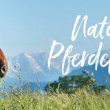 Naturnahe und artgerechte Pferdefütterung