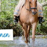 Pferde an Wasser gewöhnen