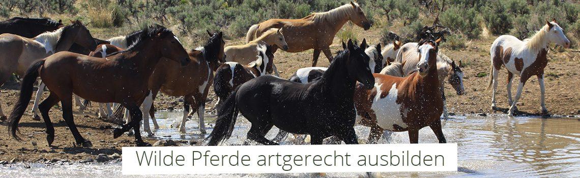 Wilde Pferde artgerecht ausbilden