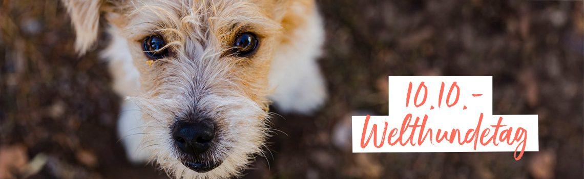 Loesdau Challenge: Was kann euer Hund Besonderes?