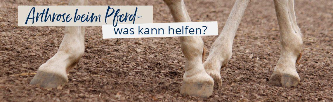 Arthrose beim Pferd – was kann helfen?