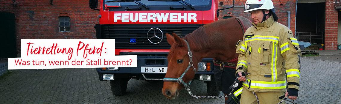 Tierrettung Pferd: Was tun, wenn der Stall brennt?