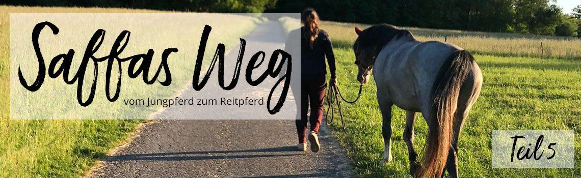 Putzen und Anbinden – so lernen es junge Pferde richtig