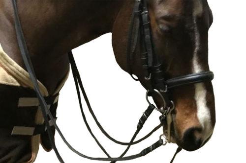 Ein Pferd mit einer Unterlegtrense und Kandare im Maul