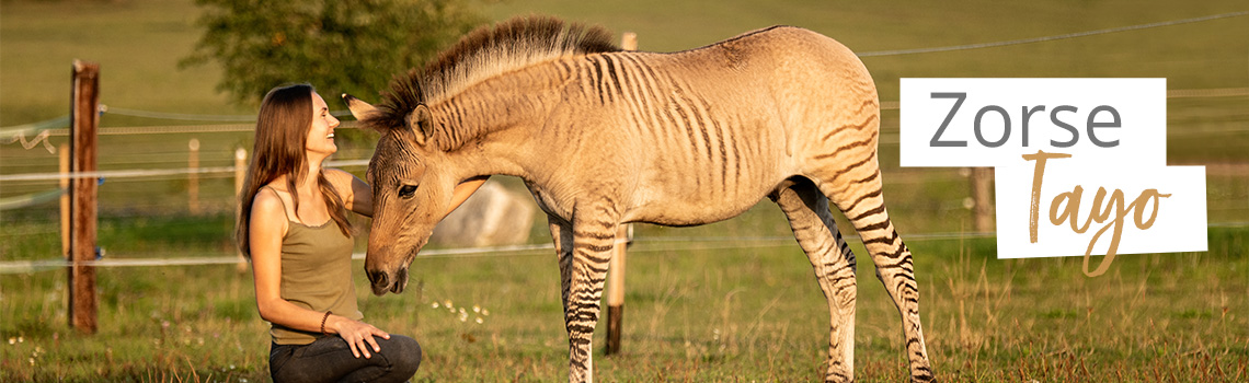 Zorse Tayo – ein Zebrapferd entdeckt die Welt