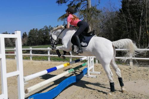 Pferd über einem Sprung