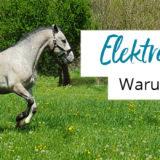 Warum sind Elektrolyte wichtig fürs Pferd?