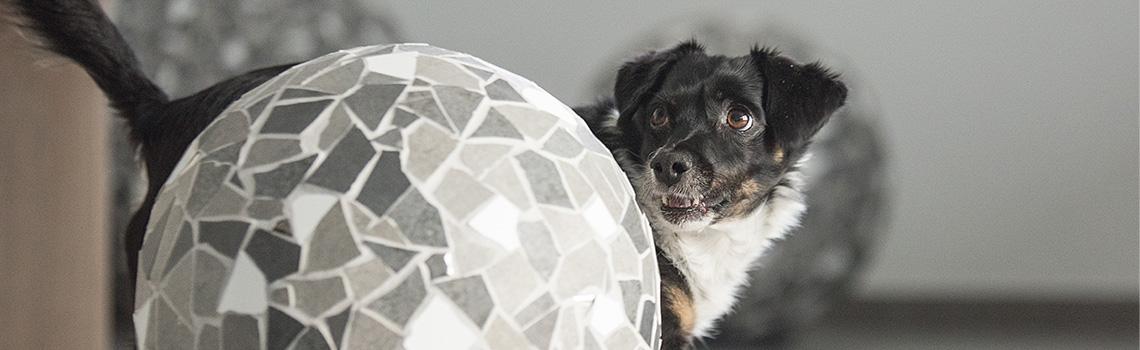 Hunde richtig beschäftigen