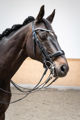 Pferd mit dressurkandare
