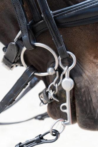 Dressurkandare im Pferdemaul