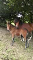 Helena und Hlyja im Juli
