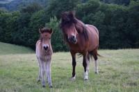 Helena und Hlyja im Juni
